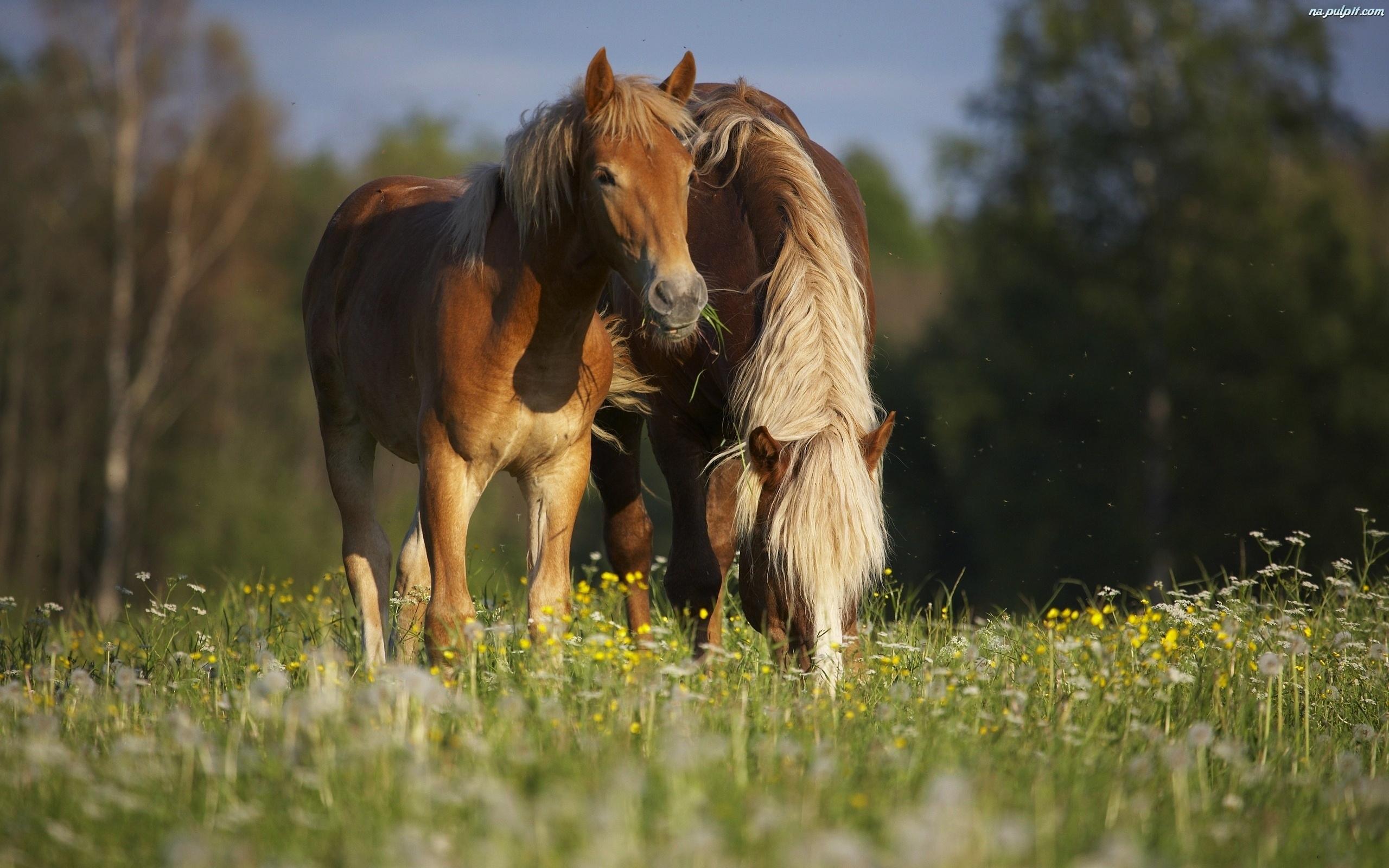 Konie Polana
